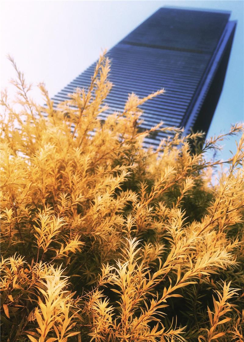 壁纸 成片种植 风景 植物 种植基地 桌面 800_1118 竖版 竖屏 手机